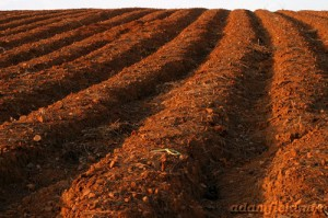 A ploughed field, similar to the one in Mike's blog